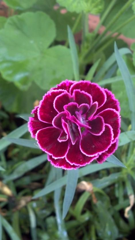 flower 8 14