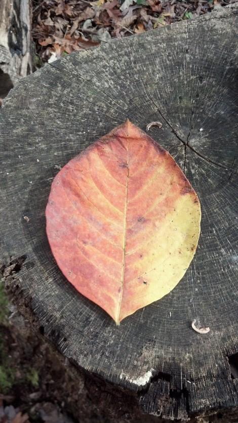 leaf 1022 fab