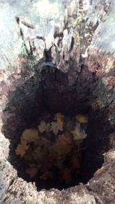 preserve 10 21 hole stump
